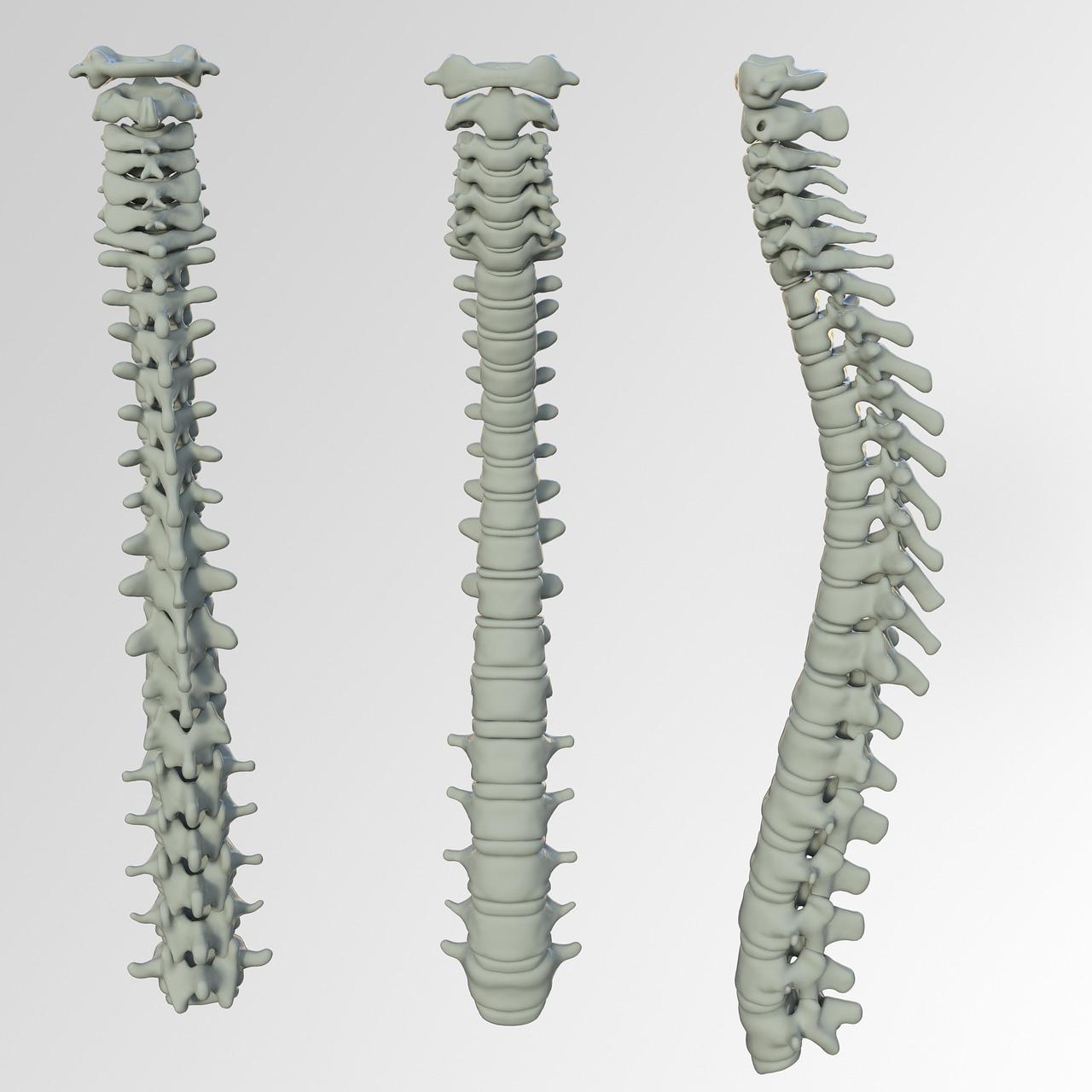 Spinal Screenings  Hugo, MN